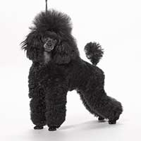 Cypress Toy Poodles